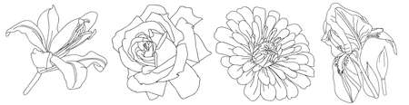 lily vector: flowers rose pattern, iris and lily, vector illustration