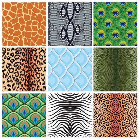 feather boa: set of seamless textures of animal skins, vector illustration Illustration
