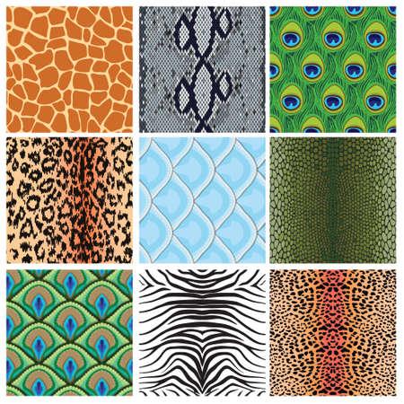 set of seamless textures of animal skins, vector illustration Illustration