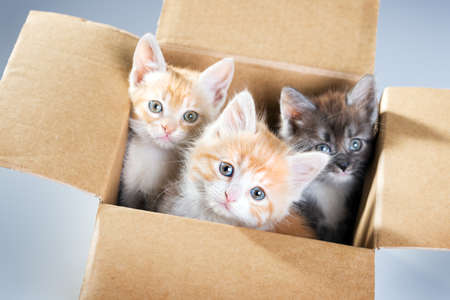 kitten small white: Little kittens in a cardboard box