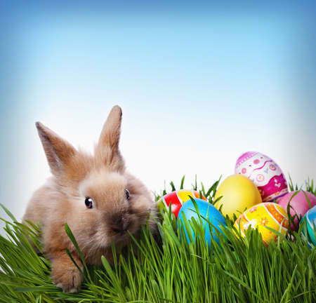 pascuas navide�as: Conejo de Pascua y huevos de Pascua en la hierba verde