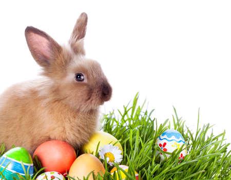 pascuas navideÑas: Conejo de Pascua y huevos de Pascua en la hierba verde