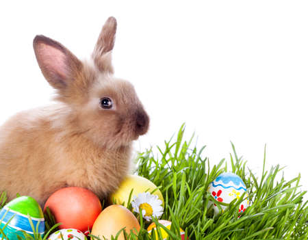 rabbits: Easter bunny and Easter eggs on green grass