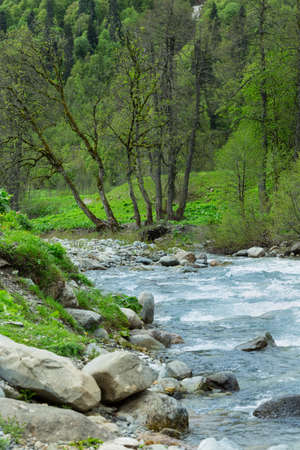 Mountain river in the forest. Abkhazia