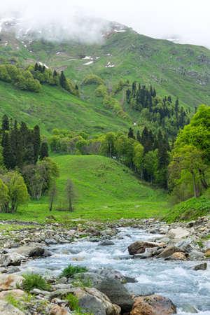 abkhazia: Mountain river in the forest. Abkhazia