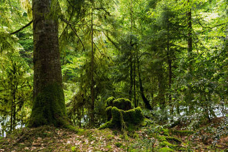 abkhazia: Abkhazia, a forest in the gorge