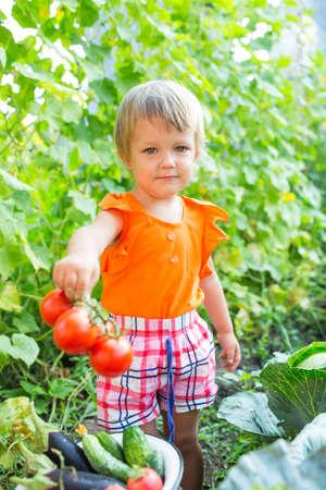 childhood obesity: Girl with harvest vegetables in the garden