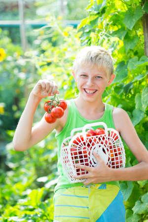 obesidad infantil: Muchacho con un cultivo de tomates en el jardín
