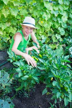 childhood obesity: Boy near the beds with peppers in the garden