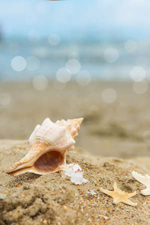 large shell and starfish on the beach
