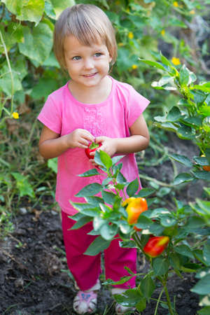 childhood obesity: Girl near the beds of pepper in the garden.