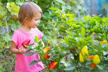 obesidad infantil: Muchacha cerca de las camas de la pimienta en el jardín.
