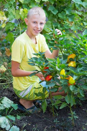 obesidad infantil: Muchacho cerca de las camas de la pimienta en el jardín Foto de archivo