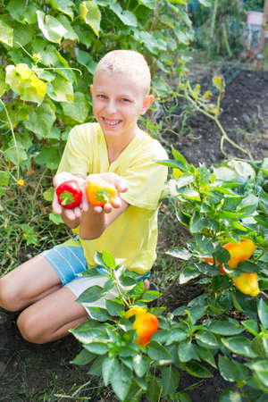 childhood obesity: Boy near the beds of pepper in the garden