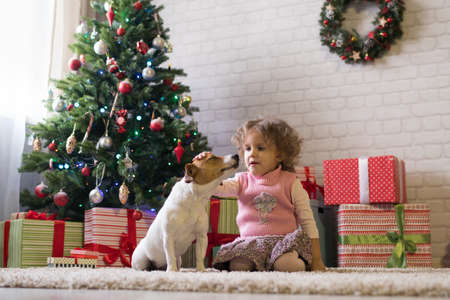 Little girl with a Jack-breed dog scattered near a Christmas tree, a child plays with a dog in a room Banque d'images