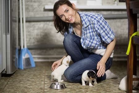 The young woman and the puppies of Jack Russell are running around the floor Stock Photo