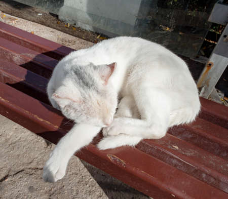 White dirty stray street mongrel cat one-eyed blind slipping on the bench on the street. Abandoned street cats shelter concept.