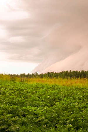 Dramatical sky and clouds before the storm over the green field and forest at summer evening. Natural background view. Text copy space. Thunderstorm concept