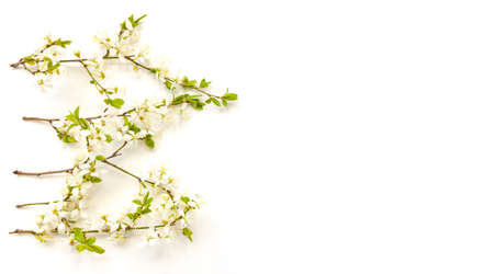 Whitecolor cherry flower blossoms on white background isolated banner. Spring holyday concept. Top view.Selective soft focus. Text copy space. 版權商用圖片