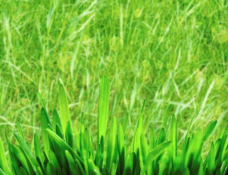 Green grass blurred bokeh background. Spring, Easter concept Foto de archivo - 151368939