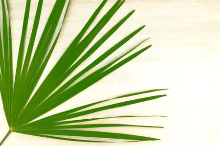 Sugar date palm leaf on contemporary bleached light painted white beige natural wood oak background 写真素材
