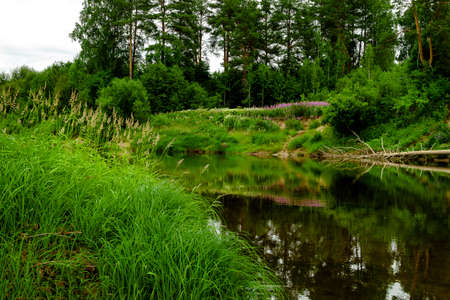 Forest river shore view landscape. Sandy beach on banks, green grass and trees overcast daylight. 写真素材