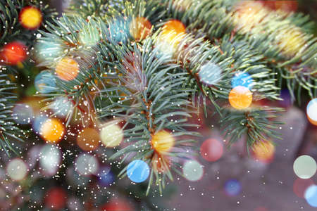 Blue Spruce Coniferous tree branch twinkle snow green needles natural abstract background. New Year, Christmas Tree Concept. Close up. Selective focus. Copy space 写真素材