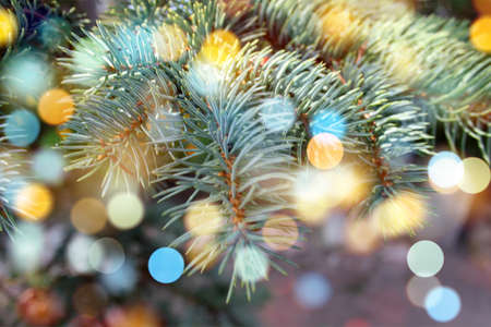 Blue Spruce Coniferous tree branch twinkle green needles natural abstract background. New Year, Christmas Tree Concept. Close up. Selective focus. Copy space
