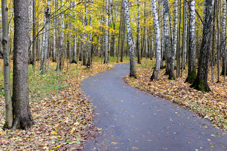 Curving path bending road in autumn forest park with yellow fall tree leaf 写真素材