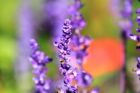 A purple flower at sun rise Фото со стока