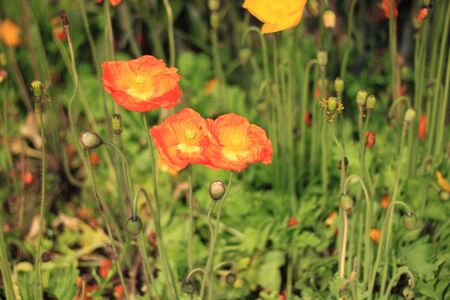 Orange flowers Фото со стока - 11120122