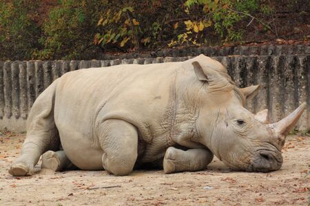 a sad rhinoceros photo