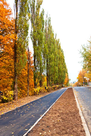 paved road in the autumn park photo