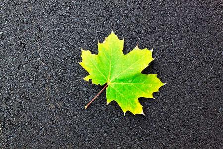 green leaf on black asphalt photo