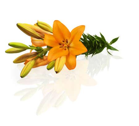orange lily: Orange lily isolated on white background Stock Photo