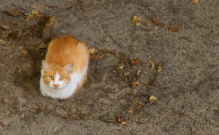 sitting on the ground: Orange and white color cat is sitting on ground