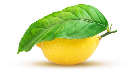 Lemon fruit with leaf isolated on white background with Clipping Path