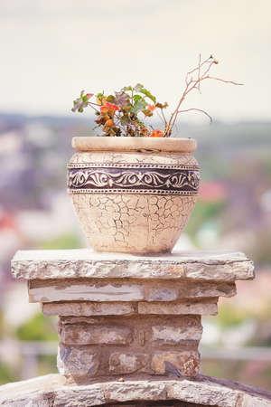 antiguo jarrón griego con flores