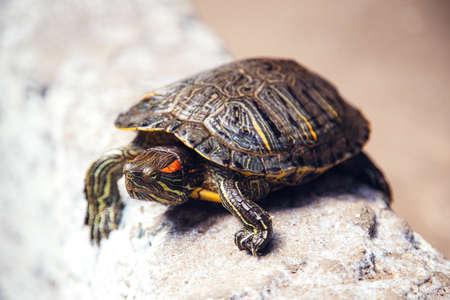 tortoise escapes