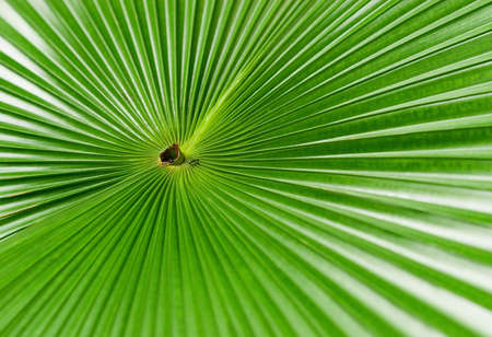 Leaf of a palm tree. A pattern Stock Photo - 2766064
