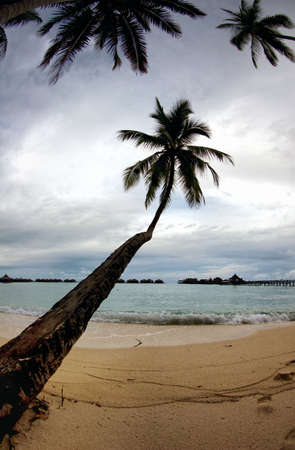 Tropical seascape with palm tree, sea and beautiful resort. Stock Photo - 3149374