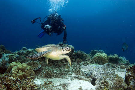The photographer in a pursuit of a turtle. Diving on Sipadan Stock Photo - 4259366