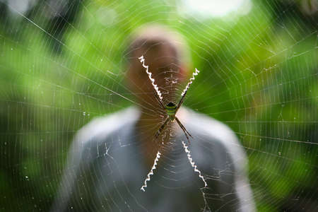 spider man: Spider and its network against the nature and a silhouette of the man. Concept of internet dependency