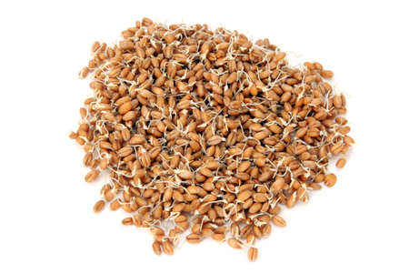 Wheat seeds with sprouts. isolated on white background.