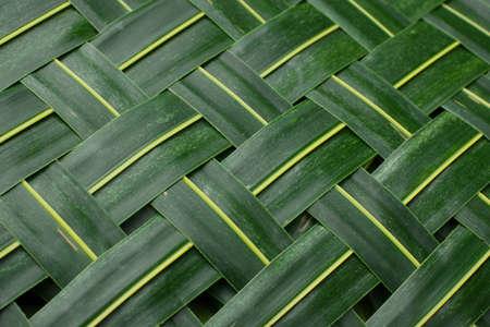 trenzado: Fondo. Estera de hojas de palmera de tejido verde  Foto de archivo