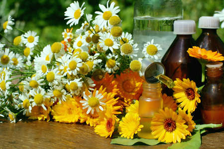 tincture: Concept of calendula and camomille  flower essential oil and tincture - beauty treatment.