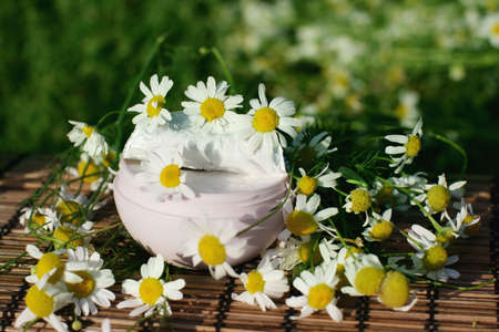 Box of natural cream with daisies - beauty treatment Stock Photo - 8041743