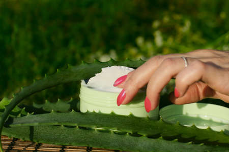 Female hand with a box of aloe vera natural cream. Stock Photo - 8041739