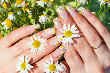 Beautiful nail design. Woman hands with camomile flowers photo