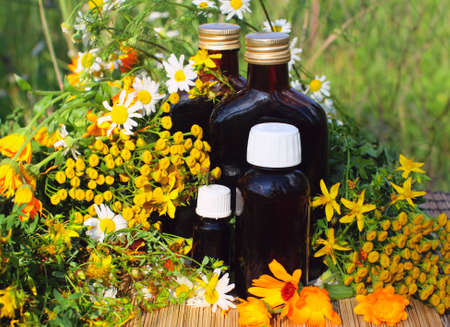 tincture: Medical herbs with aromatherapy essential oil and tincture in glass bottle.